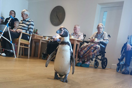 Penguins return to Oxfordshire